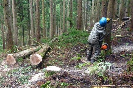 間伐伐採の現場
