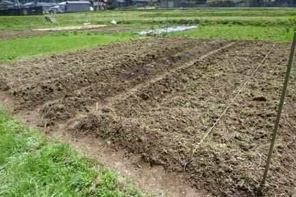 100418の畑